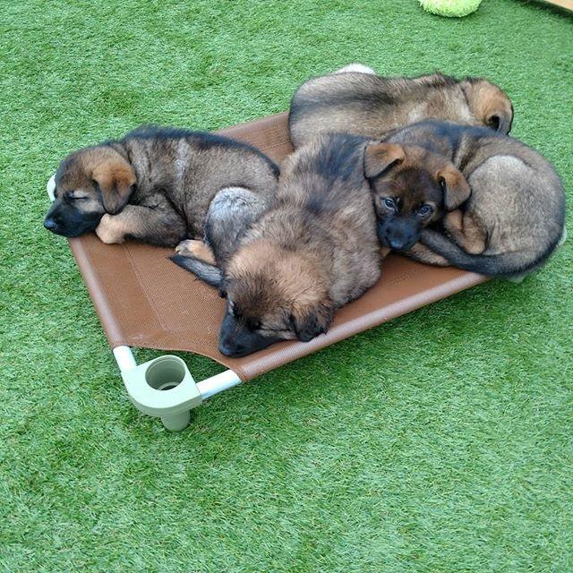 Puppies Sharing