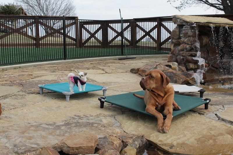 Multi Sized Dogs