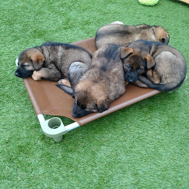 Puppies Sharing